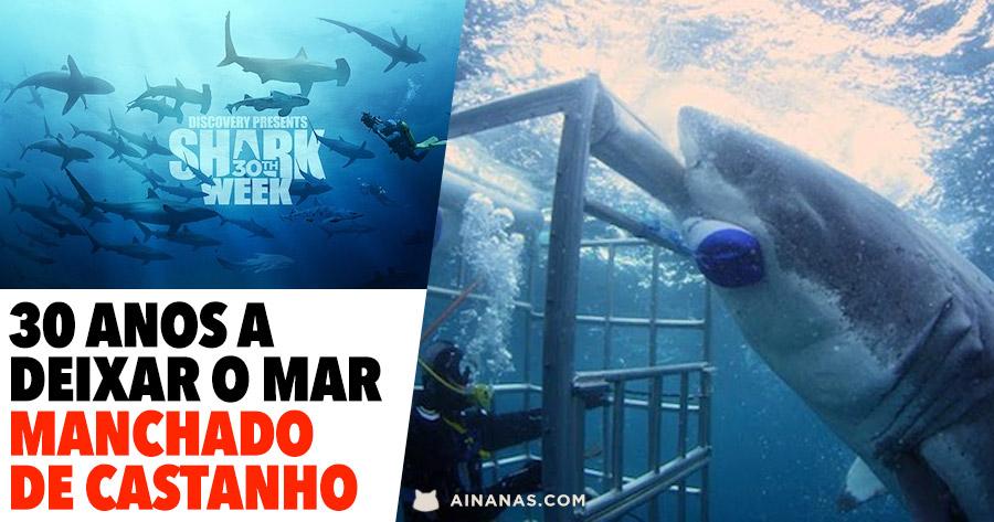 SHARK WEEK: os encontros mais assustadores de sempre!