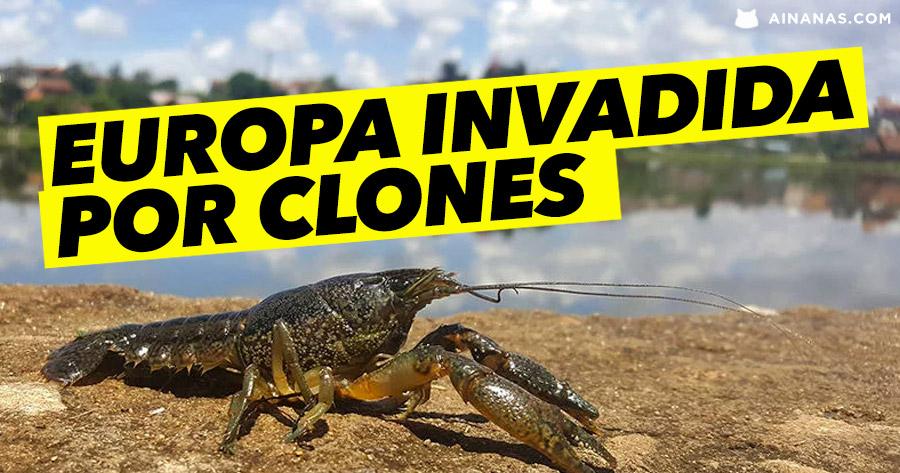 A Europa foi INVADIDA POR CLONES… de Lagostins