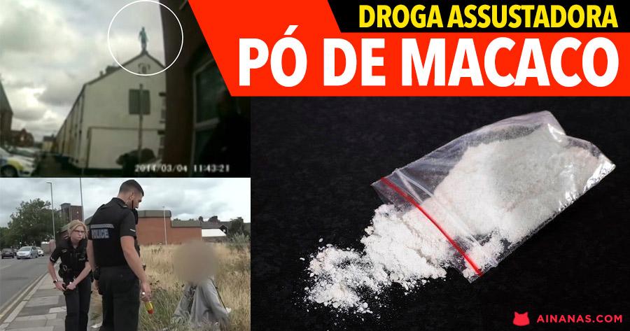 PÓ DE MACACO: a droga que está a assustar várias localidades britânicas