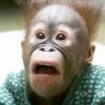 Jovem Macaco Aprende as Coisas da Vida