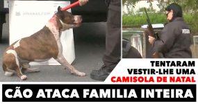 Cão Ataca Familia Inteira Após lhe Tentarem Vestir uma CAMISOLA DE NATAL