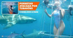 PORN STAR atacada por Tubarão? Cheira-nos a Fake
