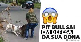 PIT BULL sai em defesa da sua dona e destroi cão que a atacou!