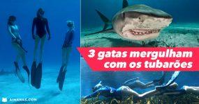 3 Gatas Mergulham Rodeadas de Tubarões Tigre