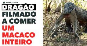 NATUREZA ASSUSTADORA: Dragão come um macaco inteiro!