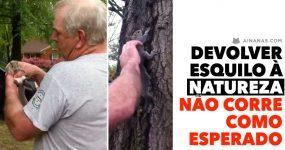 Quando devolver um esquilo à Natureza NÃO CORRE COMO ESPERADO