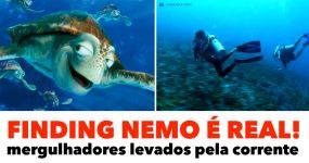 FINDING NEMO É REAL: mergulhadores curtem a corrente!