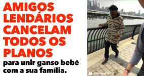 Amigos Lendários CANCELAM TODOS OS PLANOS para unir um ganso com a sua família