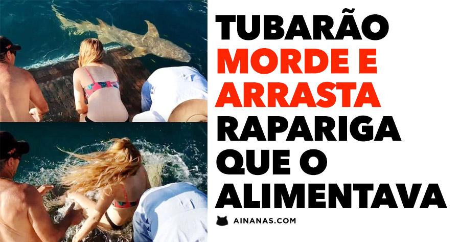 Tubarão morde e arrasta rapariga que o alimentava
