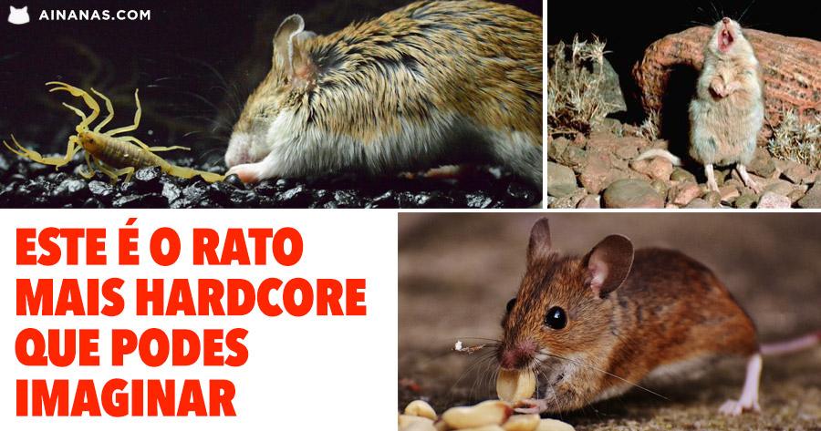 Este é o rato MAIS HARDCORE que podes imaginar