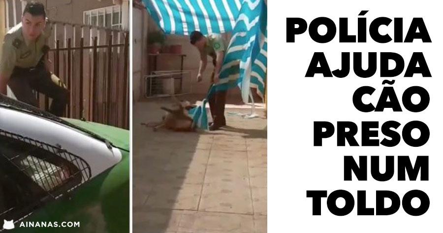 Polícia Ajuda cão Preso num Toldo