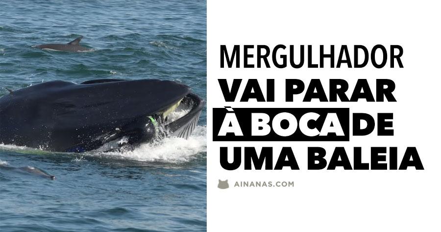 Mergulhador vai parar à BOCA DE UMA BALEIA