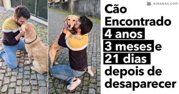 Cão encontrado em Santo Tirso 4 ANOS DEPOIS de desaparecer