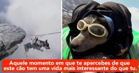 OMG: Dude leva o cão a voar de Wingsuit