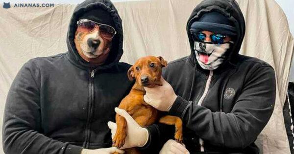 Gangs que ROUBAM CÃES estão a Aumentar