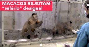 Macacos REJEITAM Salário Desigual