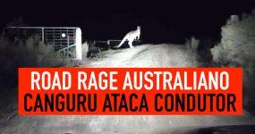 ROAD RAGE AUSTRALIANO: Canguru ataca condutor!