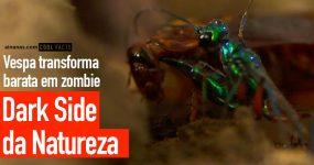 Vê uma vespa transformar BARATA em ZOMBIE