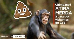 Chimpanzé ATIRA MERDA aos visitantes do Zoo