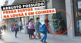 ARBUSTO POSSUÍDO prega sustos na Lousã e em Coimbra