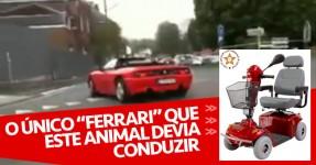 Burro Trapalhão Esbardalha Ferrari