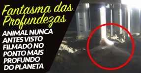 FANTASMA DAS PROFUNDEZAS: Animal Nunca Antes Visto