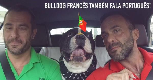 Bulldog Francês TAMBÉM FALA Português!