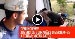DENUNCIEM: Gunas de Guimarães Tentam Matar Gatos ao Tiro
