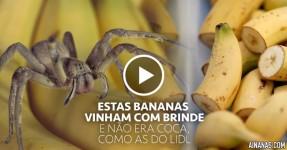 Banana Vem com Brinde MUITO Indesejado
