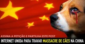 URGENTE: Internet Unida para Travar Massacre na China