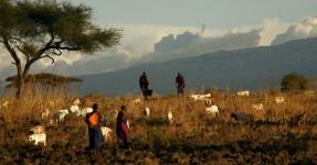 Mundo está a iniciar sexta extinção em massa e homem pode desaparecer