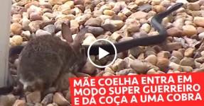Mãe Coelha dá um Espancamento a uma Cobra