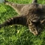 Gato Morto Transformado em Helicóptero Telecomandado