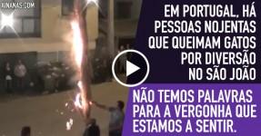 Em Portugal Queimam-se Gatos por Diversão no S. João
