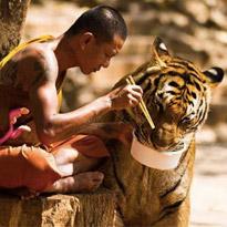 TOP 10: Fotos Épicas com Animais Selvagens