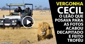 O Leão mais Famoso e Amigável do Zimbabwe acabou Decapitado e Feito Troféu