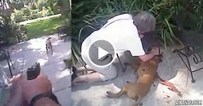 DEVASTADOR: Polícia Abate cão, Dona vê-o Morrer