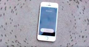 iPhone faz formigas andarem em círculo