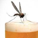 Melgas e Mosquitos Preferem quem Bebe Cerveja