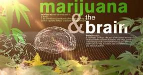 Médicos Elaboram Video que Mostra Efeito da Cannabis no Nosso Corpo