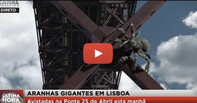 ULTIMA HORA: Aranhas Gigantes Invadem Lisboa