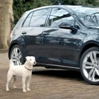 O cão que queria ser um automóvel