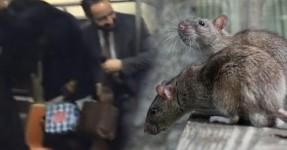 Ratazana Lança o Pânico no Metro de Nova York