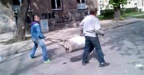 Jovens Polacos testam canhão artesanal