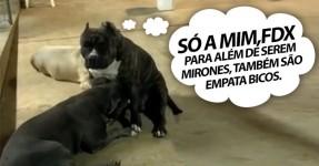 PROVADO: Até os cães apreciam um bom bico