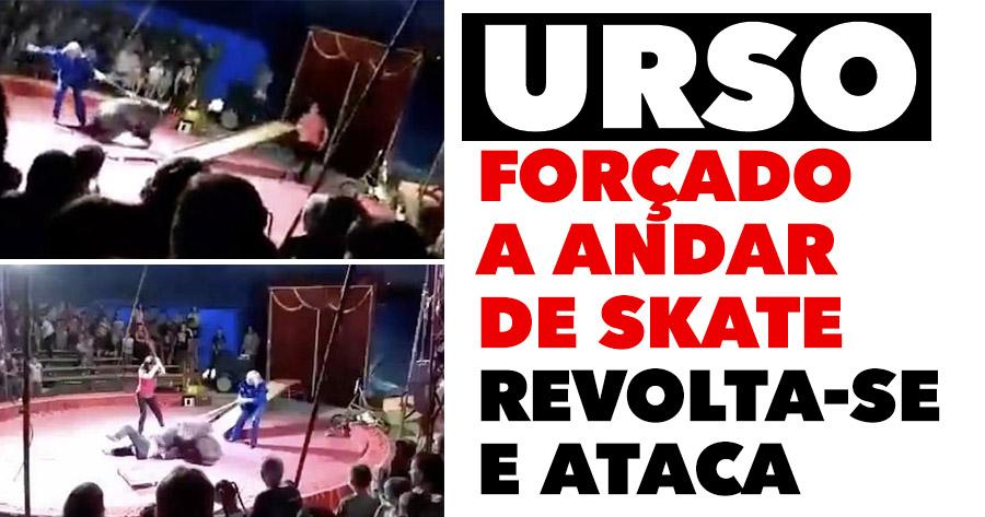 Urso forçado a andar de skate REVOLTA-SE E ATACA