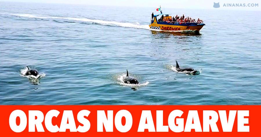ORCAS avistadas no ALGARVE
