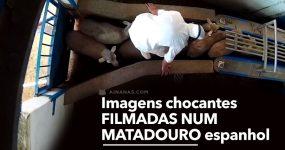 Imagens chocantes filmadas num MATADOURO em Espanha
