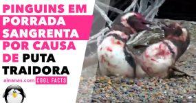 Pinguins em PORRADA SANGRENTA por causa de PUTA TRAIDORA