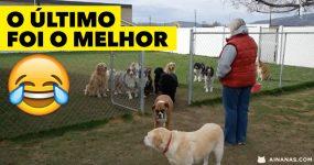 Cães esperam pacientemente que o seu nome seja chamado